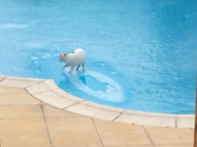 Die aktive Überwinterung des Pools